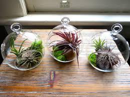 hanging air plant terrariums 1001 gardens