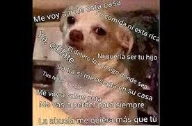 Memes De Chihuahua - chihuahua 3 te amo pinterest
