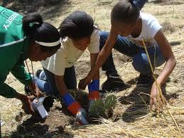 native plant restoration service learning opportunities in state parks