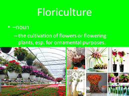 what is horticulture what is it to you take a minutes