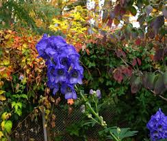 plants native to new york saratoga woods and waterways big and blue and beautiful and