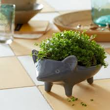 animal planter ceramic animal planter hedgehog west elm want want want