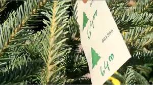christmas tree prices christmas tree prices could be slightly higher this year wcbd