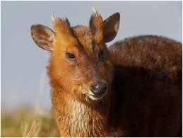 serena parker afghan hound judge vampire deer u201d revisited fun animals wiki videos pictures stories