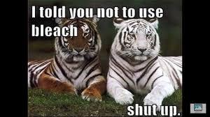 Tiger Meme - tiger meme album on imgur