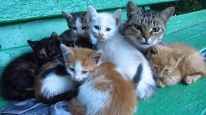 proud mother cat and its 5 cute kittens must see how beautiful