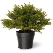 national tree 15 inch globe juniper in green pot lcb4