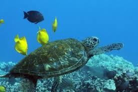 symbiotic sea life