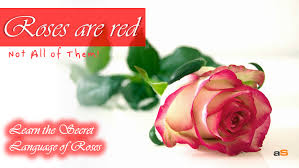 roses colors race for the oscars 2015 heats up here are the hot nominees