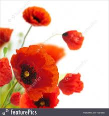 floral design decoration flowers poppies border corner picture