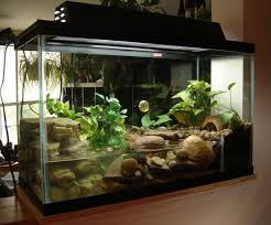 fire belly toad tank setup post your firebelly toad tank pics