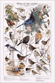 birds of the garden winter ii chart art pinterest bird
