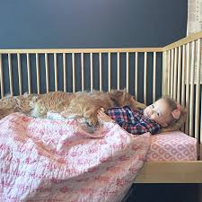 How To Convert Crib To Bed Small Space Living The Toddler Bed Dilemma Chezerbey