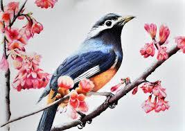 9 bird drawings art ideas free u0026 premium templates
