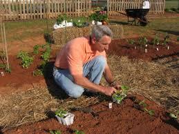 how to start an organic garden how tos diy