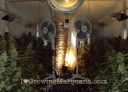 Grow Room Lights Marijuana Grow Journal White Widow