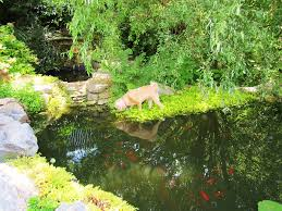 build a backyard pond gardening ideas pinterest backyard