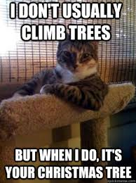 Cat Christmas Tree Meme - the most interesting cat in the world memes quickmeme