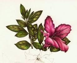flowers valwebb com
