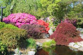 the roses of prose nice place to visit by barbara edwards