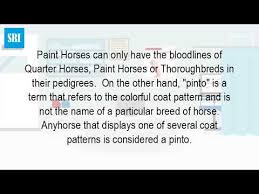 what is the difference between a pinto horse and a paint horse