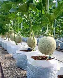 Fruit Garden Ideas Fruit Garden Ideas Garden Fruit Garden Plant Ideas Financeintl Club