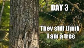 Tree Meme - day 3 they still think i am a tree justpost virtually entertaining