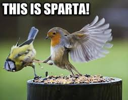 Funny Bird Memes - 30 most funny bird meme pictures of all the time