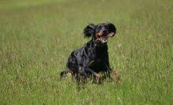 Dog Friendly Cottages Lake District by Dog Friendly Cottages And B U0026bs Cumbria Dog Friendly Cottages
