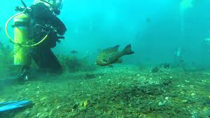 Texas snorkeling images Scuba diving in spring lake san marcos tx jpg