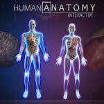 Interactive 3d Anatomy Human Anatomy Diagram Learning Visual Interactive Human Anatomy