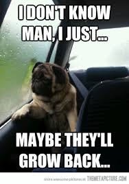 Dog In Car Meme - introspective dog the meta picture