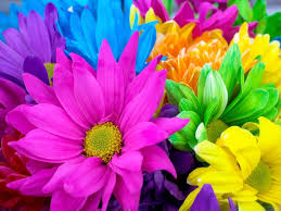free flowers free flower screensavers backgrounds high resolution