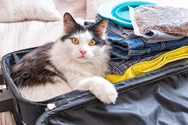 traveling with cats images 10 tips for traveling with cats on a road trip this summer catster jpg