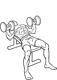 Flat Bench Barbell Press Groin Injury Specialist Dr Green U0027s Blog