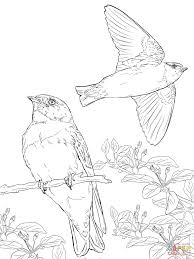 realistic cliff swallows coloring page free printable coloring pages