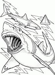 shark coloring pages free 28 images shark coloring free