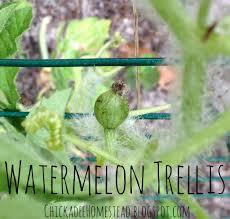 diy watermelon trellis