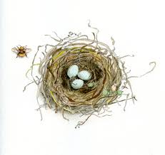 how to draw a bird u0027s nest and add color