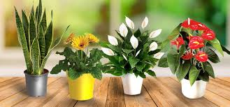 6 air purifying indoor plants you need right now health idiva