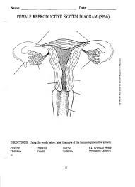 male and female reproductive system labeled diagram human