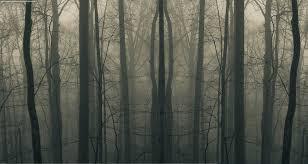 dark forest twitter background jane doe
