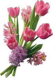 imagenes flores bellisimas taller creativas arte digital cristiano ramos encantadores de