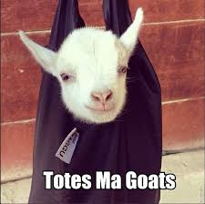 Totes Magotes Meme - totes ma goats totes goats looks like our marshmallow animal