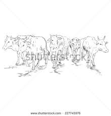 cow sketch stock images royalty free images u0026 vectors shutterstock
