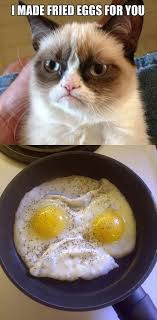 Unhappy Cat Meme - grumpy cat image gallery know your meme