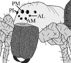 polarized light detection in spiders journal of experimental biology