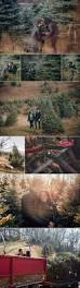 paige and aj u0027s christmas tree farm proposal on howheasked com