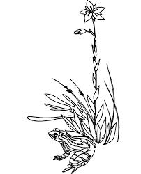 frog hide grass coloring pages color luna