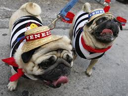Tips For Keeping Your Pets Safe On Halloween Southern Living